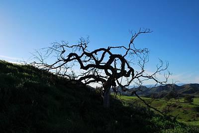 Photograph - Tree Of Light - Landscape by Matt Harang