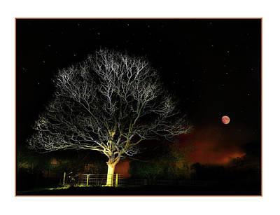 Moonlit Night Photograph - Tree Of Light by Mal Bray