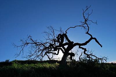 Photograph - Tree Of Light - Straight View 2 by Matt Harang