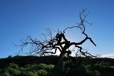 Photograph - Tree Of Light - Straight View by Matt Harang