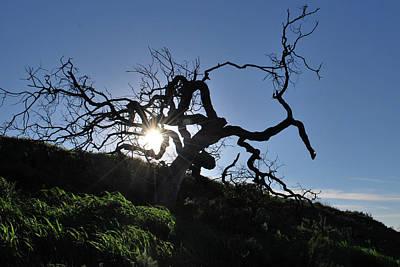 Photograph - Tree Of Light - Sunshine Through Branches by Matt Harang