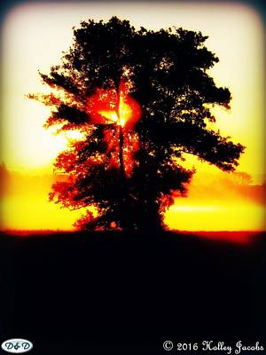 Photograph - Tree Of Liife by Holley Jacobs