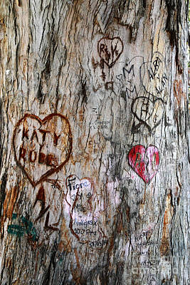 February 14th Photograph - Tree Of Love 5 by James Brunker