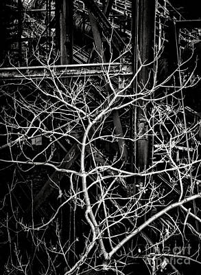 Photograph - Tree Of Non Life by Olivier Le Queinec