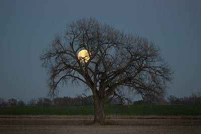 Cornfields Photograph - Tree Of Supermoon by Aaron J Groen