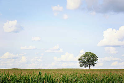 Photograph - Tree Of The Corn Field by Joni Eskridge