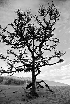 Photograph - Tree Of The Dunes by Dale Stillman