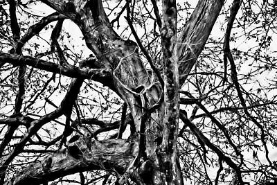 Photograph - Tree Of Wisdom by Gina O'Brien