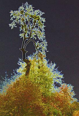 Digital Art - Tree Of Wonder by Dale Stillman