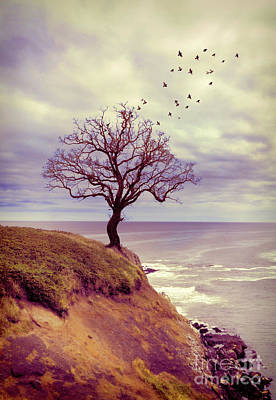 Photograph - Tree On A Cliff By The Sea by Jill Battaglia