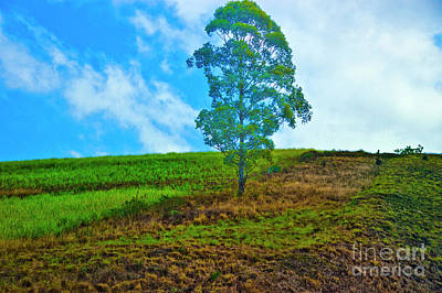 Photograph - Tree On A Hill by Rick Bragan