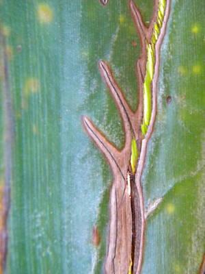 Fotography Digital Art - Tree On A Leaf by Alyona Firth