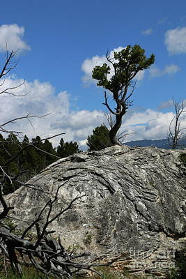 Photograph - Tree On A Travertine Mound by Christiane Schulze Art And Photography