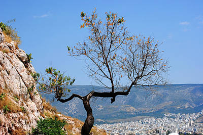 Photograph - Tree On Acropolis Hill by Robert Moss