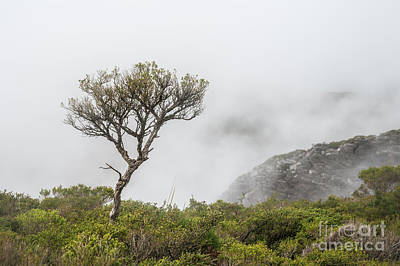Photograph - Tree On Bluff Knoll by Werner Padarin