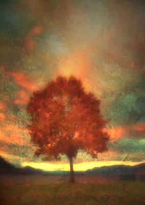 Photograph - Tree On Fire by Tara Turner