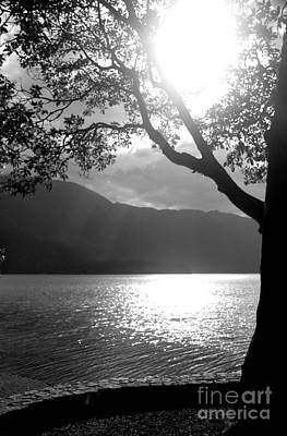 Tree On Lake Art Print