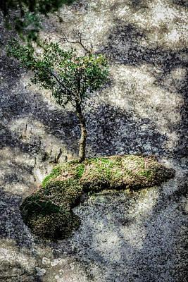 Photograph - Tree On Moss On Rock At Yosemite by Adam Rainoff