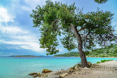 Photograph - Tree On Northern Dalmatian Coast Beach, Croatia by Global Light Photography - Nicole Leffer