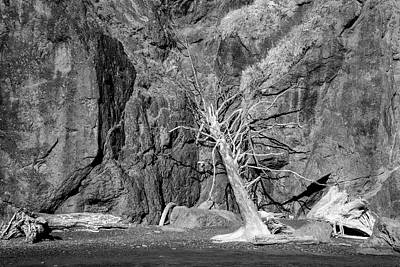 Tree On Ruby Beach Original