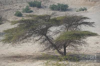 Photograph - Tree On Sir Bani Yas Island by Jimmy Clark
