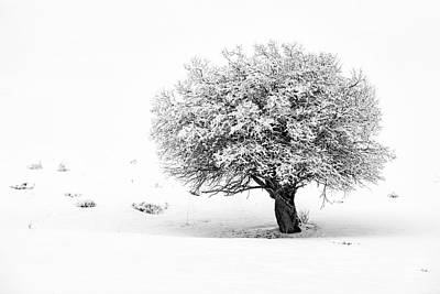 Tree On Snowy Slope Art Print