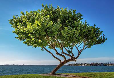Photograph - Tree On The Bay by Richard Goldman