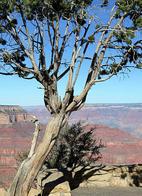 Photograph - Tree On The Edge by Laurel Powell