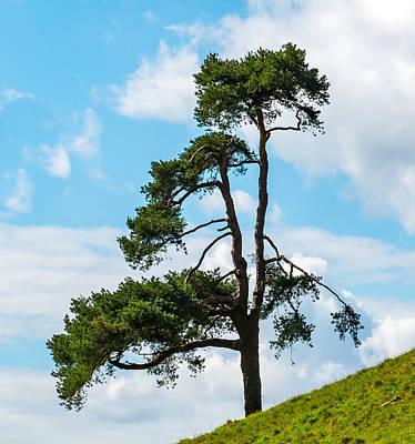 Photograph - Tree On The Hill by Colin Rayner
