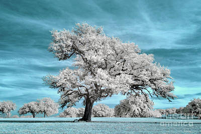State Word Art - Tree on the Pedernales Infrared by Norman Gabitzsch