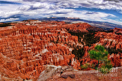 Photograph - Tree Over Bryce Amphitheater by Blake Richards