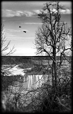 Photograph - Tree Overlooking Niagara Falls-bw by Tammy Wetzel