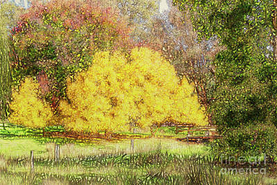 Tree Park Aglow Art Print by Elaine Teague
