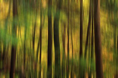 Photograph - Tree Pattern by Emmanuel Panagiotakis