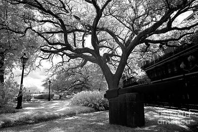 Tree Pattern In Jackson Square Infrared Print by John Rizzuto