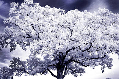 Art Print featuring the photograph Tree by Paul W Faust - Impressions of Light