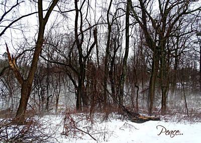 Photograph - Tree Peace Card by Brenda Conrad