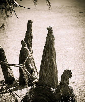Photograph - Tree People by Marilyn Hunt