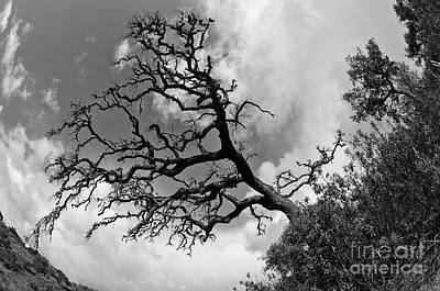 Photograph - Tree Perspective In Monochrome by Angelo DeVal