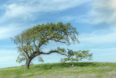 Photograph - Tree by Peter Dyke