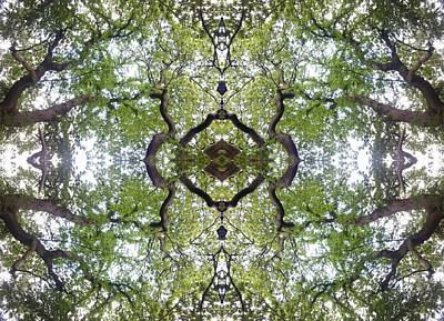 Tree Photo Fractal Art Print