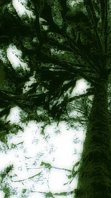 Wall Art - Photograph - Tree Poem by Larissa Pirogovski