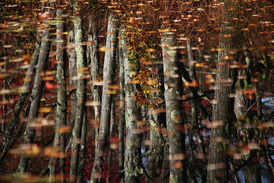 Tree  Reflect Art Print by Karol Livote