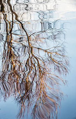 Photograph - Tree Reflection  by Cliff Norton
