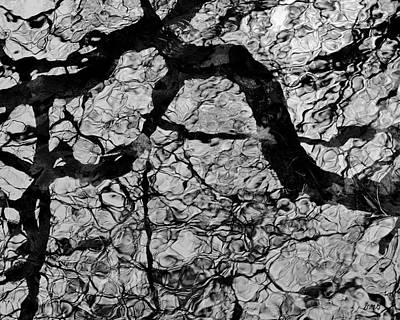 Photograph - Tree Reflection I Bw by David Gordon