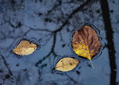 Photograph - Tree Reflection by Jean Noren