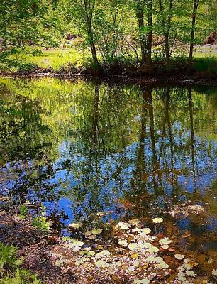 Photograph - Tree Reflections by Anne Sands
