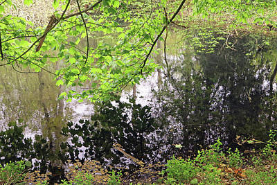 Photograph - Tree Reflections by Tony Murtagh