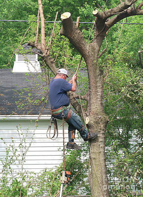 Photograph - Tree Remover by Ann Horn