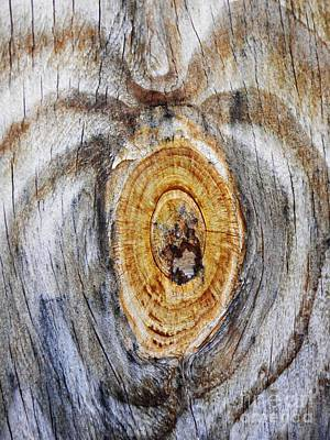 Photograph - Tree Ring Abstract 1 by Sarah Loft
